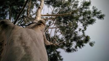 Take a tour of Tel Aviv's most majestic trees
