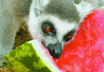 Biblical Zoo Celebrates 25 Years, Aquarium 1 Year (WATCH)