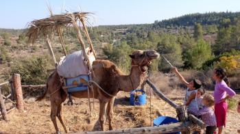 A Camel Sukkah? Neot Kedumim Displays 20 Sukkot from the Gemara