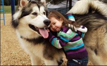 This Summer, Take the family to see working dogs at Dogland Kennels