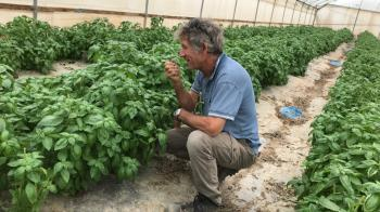 Growing Dates, Herbs and Coexistence in the Jordan Valley