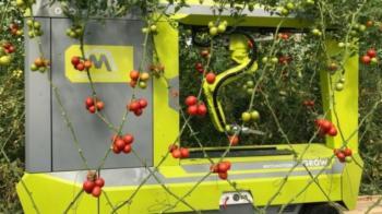 Israeli startup develops first tomato-picking robot