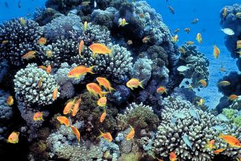Eilat's spectacular coral reef is surprisingly on the mend. Here are its best beaches