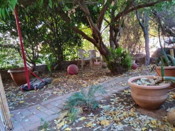 garden apt for long term rent in Arnona