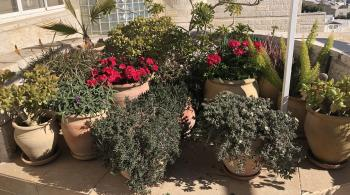 OUTDOOR PLANTS AND POTS FOR SALE